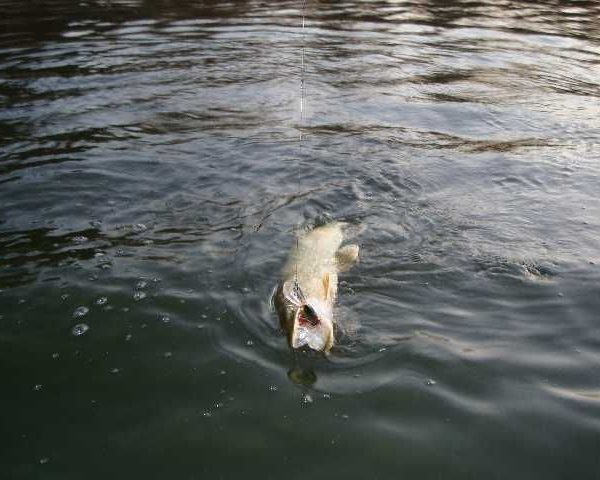 Ловля рыбы на Выповзянке