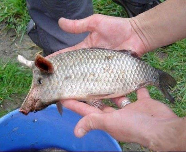 прикормки для рыбалки купить