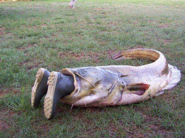 про рыбалку на толстолоба самодельная прикормка