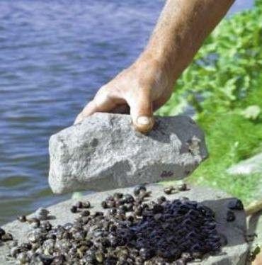 прикормка рыбы на течении зимой