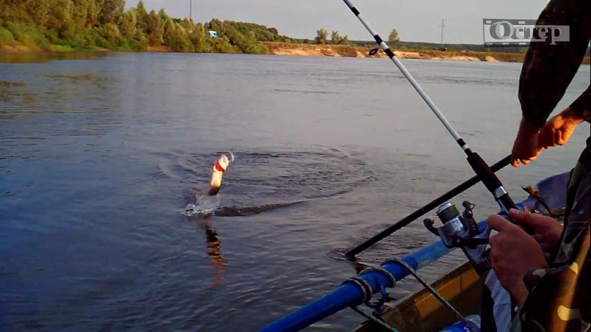ловля на десне с берега