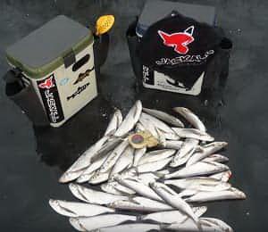 Улов на рыболовную гирлянду