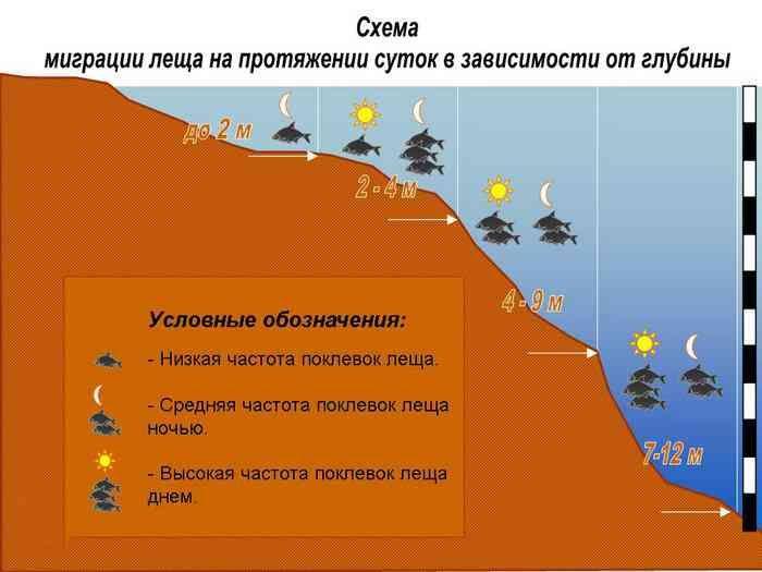 Схема миграции леща на протяжении дня