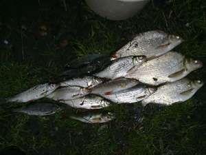 Результаты рыбалки на фидер