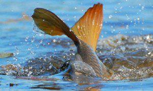 Запрет во время нереста рыбы