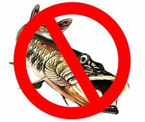 Запрет на рыбалку на территории РФ