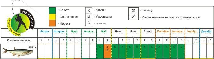 Календарь ловли чехони