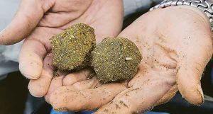 горох прикормка для карпа