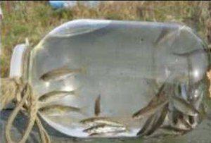 Ловушки для рыб своими руками