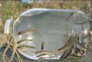 Все ловушки для рыбы своими руками