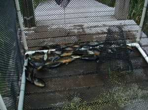 Каркасная ловушка для рыбы