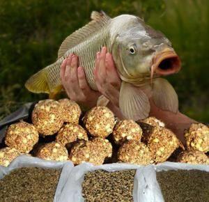 Как прикармливать карпа на осенней рыбалке