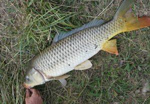 Как выбрать наживку для рыбалки на сазана осенью