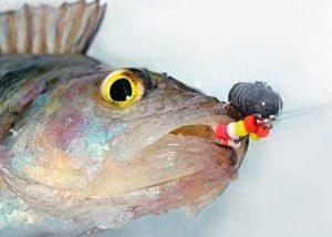 Видео зимней рыбалки на окуня на балду поможет вам получить отличный улов