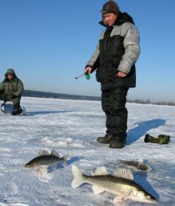 Поиск места для ловли судака на балансир зимойц