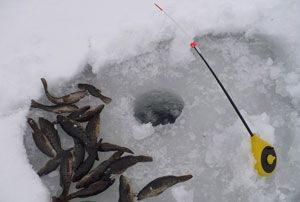 Рыбалка на ротана зимой - на что и как ловить