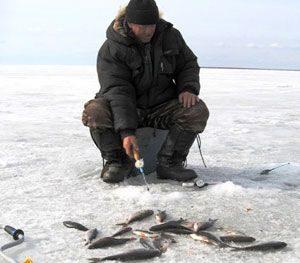 Техника ловли плотвы зимой на игру