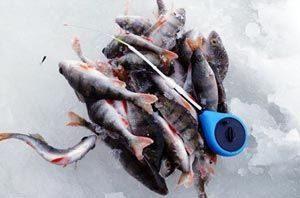 Какую мормышку выбрать для ловли окуня в разные периоды зимы