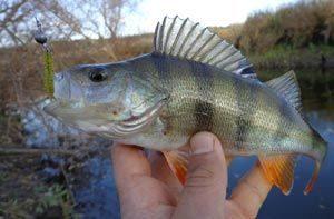 Как найти место для микроджиговой рыбалки на окуня