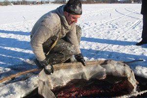 Как добыть мотыля для рыбалки зимой