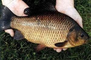 Ловля рыбы руками
