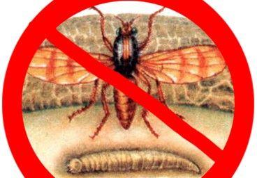Как уберечь тарань от мух