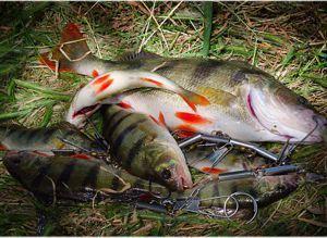 хранение рыбы на рыбалке
