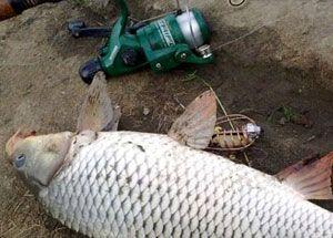 Все о кашах для рыбалки